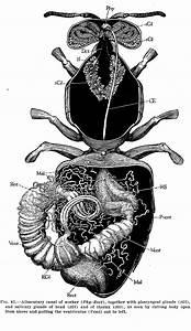 Microscopy  U0026 Anatomy