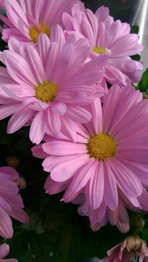 Pin By Susan On Flowers Beautiful Pink Flowers Amazing