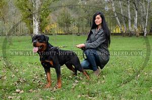 1000 images about rottweiler harnesses on pinterest With rottweiler dog training