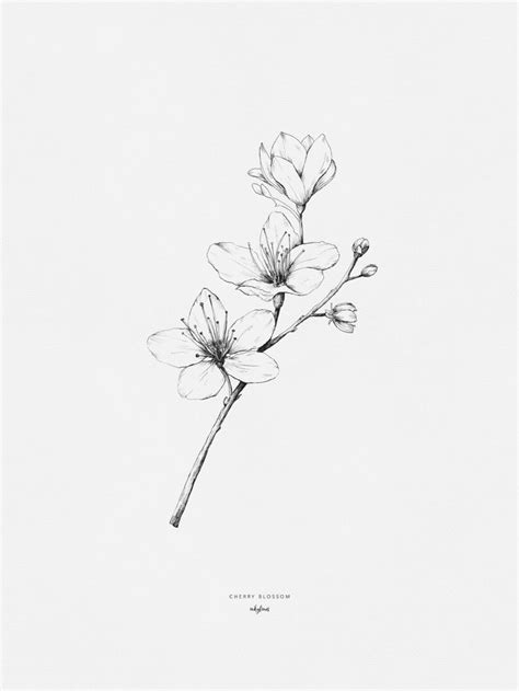 Cherry blossom | Blossom tattoo, Cherry blossom drawing, How to draw hands