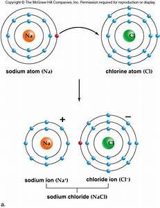 Chapter 1  U2013 Biochemistry