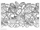 Coloring Seashell Pages Ocean Seashells Printable Beach Shell Colouring Adult Themes Different Getcolorings Ones Pick Enjoy Without sketch template