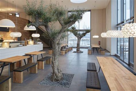 Olivenbaum Im Haus by Olivenbaum Kaufen Tojas Mediterraner Baumhandel Referenzen