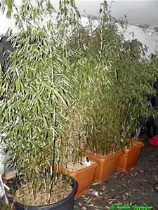 Bambus Als Sichtschutz Im Kübel : bambus als sichtschutz ~ Frokenaadalensverden.com Haus und Dekorationen