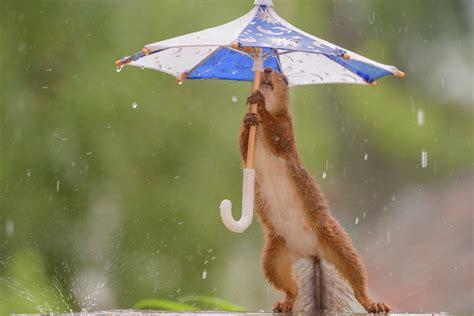 Where Did the Umbrella Come From?