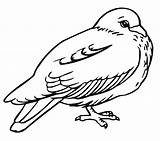 Coloring Pigeon Pages Printable Bird Results Bestcoloringpagesforkids sketch template