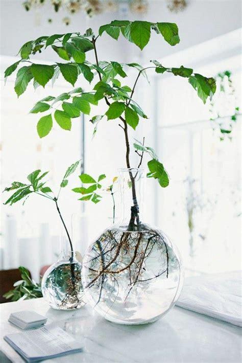 comment décorer ma chambre à coucher savourez la beauté de la plante d intérieur dans notre galerie