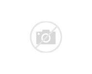 Pink Maltese Dog Puppies