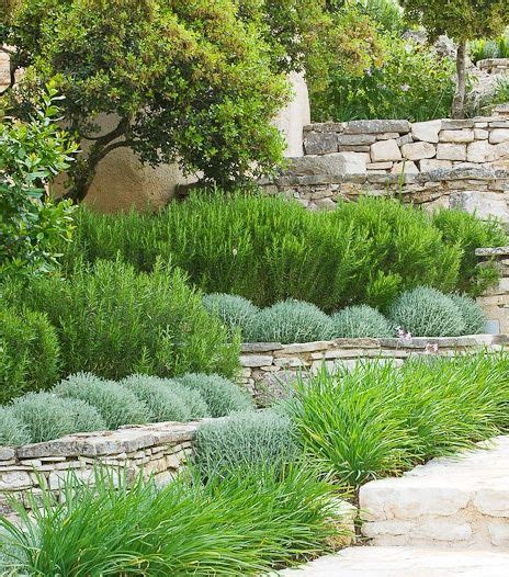 soft landscaping ideas a mediterranean planting scheme with santolina iris and rosemary in groups on dry stone walls