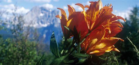 flora und fauna der dolomiten  alta badia