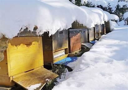 Bienen Winter Machen Eigentlich Bienenundnatur Sich Natur