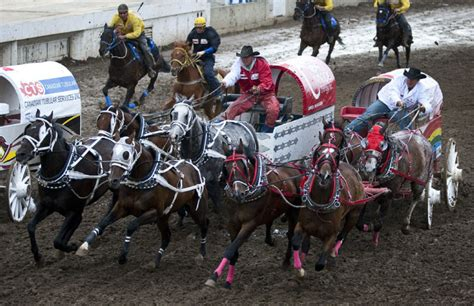 horse deaths   questioning stampede chuckwagon
