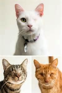 cat adoption 559 best pet adoption marketing ideas images on