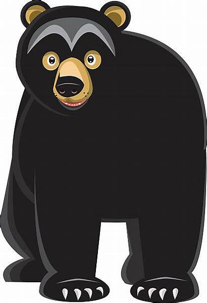 Bear Vector Looking Illustrations Clip Istock Graphics