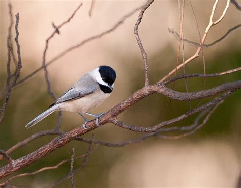 birds  birds audubon south carolina