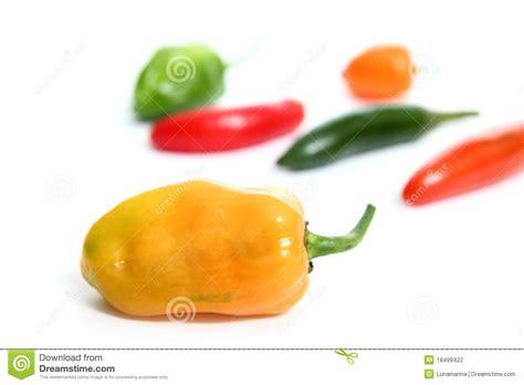 Chili Habanero Serrano Hot Mexican Peppers Stock