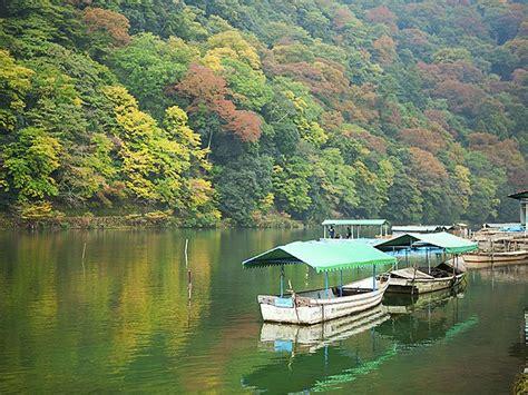 cherry blossom katsura river kyoto travel tips travel guide