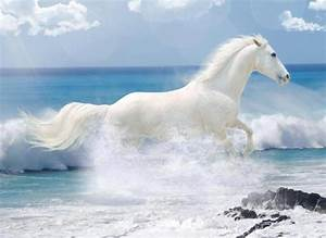 white horse running on the beach | Horse Study | Pinterest