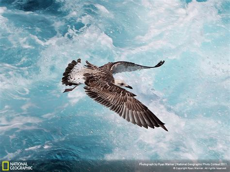 national geographic wallpaper collection gallery
