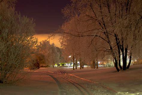 heart means  beautiful tree winter scenes