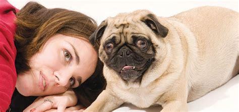 expert unhealthy attachment modern dog magazine