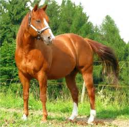American Quarter Horse Related Keywords & Suggestions ...