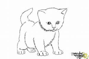 How to Draw a Kitten Step by Step - DrawingNow