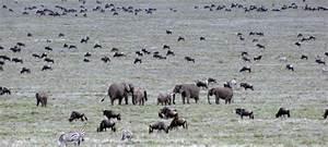 Ecosystem Of Animals | www.pixshark.com - Images Galleries ...