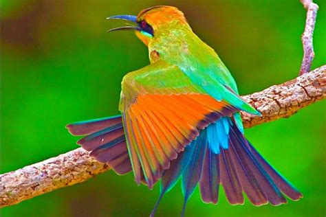 Top 10 Most Beautiful Birds Wallpapers