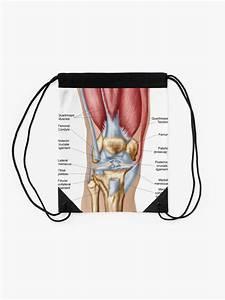 U0026quot Anatomy Of Human Knee Joint  U0026quot  Drawstring Bag By