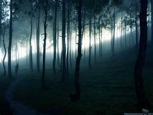 information about dark winter forest background