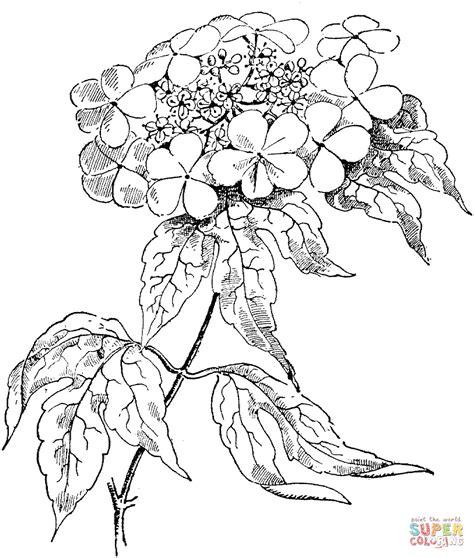 disegni di fiori difficili disegni di fiori da colorare dt54 pineglen con disegni di