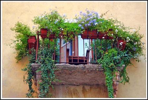 Sichtschutz Durch Pflanzen by Balkon Sichtschutz Durch Pflanzen Balkon House Und