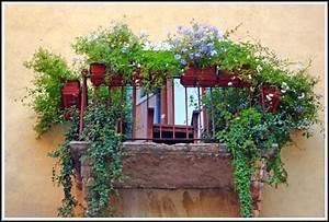 Balkon Sichtschutz Pflanzen : balkon sichtschutz durch pflanzen balkon house und dekor galerie e5z3le2gza ~ Indierocktalk.com Haus und Dekorationen