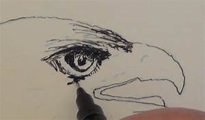 How to Draw a Golden Eagle in Pen and Ink — Online Art Lessons