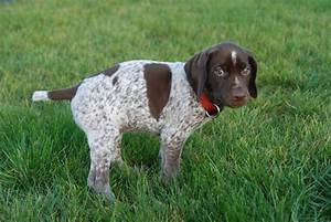 Hunting Dog Breeds (Sporting Group) — Not In The Dog ...