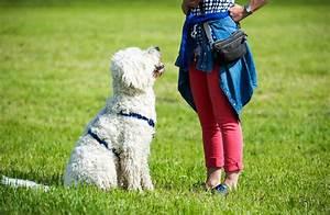 Ich Suche Einen Großen Hund : ich lasse meinen hund nicht in einen anderen angeleinten ~ Jslefanu.com Haus und Dekorationen