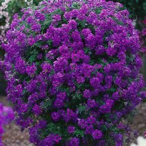 online flower delivery verbena temari blue