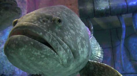 the lost chambers aquarium atlantis the palm resort dubai