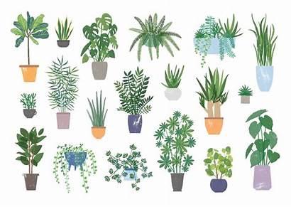 Plants Plant Houseplant Indoor Houseplants Shutterstock Which