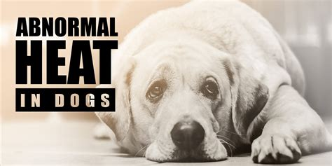 how are dogs in heat dog in heat when to breed breed dogs spinningpetsyarn