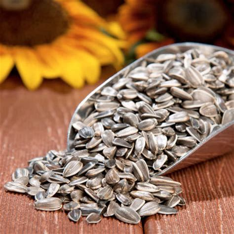 d gss california grey striped sunflower seeds per pound