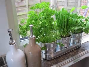 kitchen herb garden ideas indoor herb garden ideas