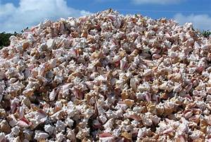 conch farming could catch on in brevard With document shredding cocoa fl