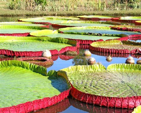 kenilworth aquatic gardens washington dc s best kept secret the national arboretum