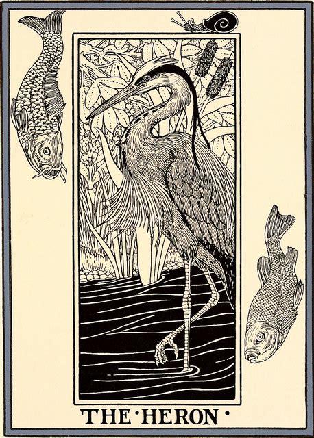 heron   fish wikipedia