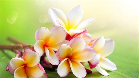 Flowers  Free Download Hd Wallpapers