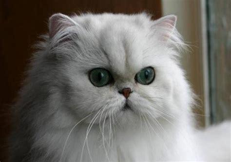 imagenes bonitas de gatitos tiernos  divertidos