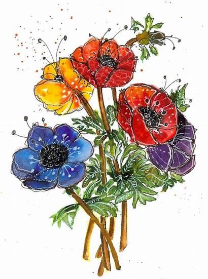 Watercolor Poppy Flowers Clipart Martha Lever Watercolour