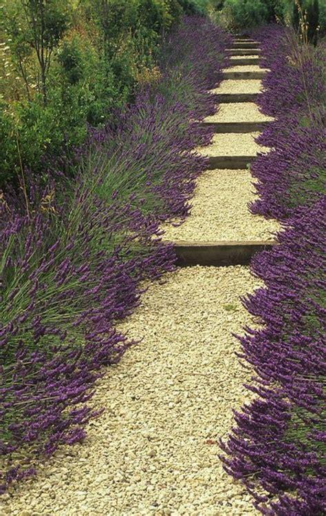 Garten Gehweg Ideen by Lavendel Gehweg Garten Ideen Gehwege